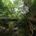 Photos: 森林浴・・のれん滝上流