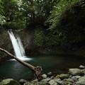 Photos: 座頭滝・・ここにも倒木が