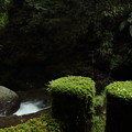 Photos: 苔がふわふわ