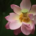 花の中はこうなってます