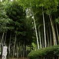 竹林園裏入り口