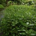 笹が育ってます・・竹林園
