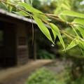竹雨のあと・・竹林園