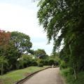 竹林園の夏