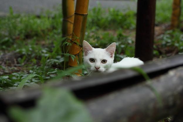 ノラ猫子猫・・竹林園
