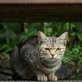 Photos: 竹林園にはノラ猫が多い