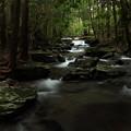 Photos: 滝から上流を