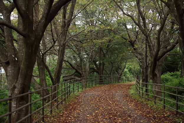 落葉が秋の風景