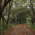 Photos: 落葉が秋の風景