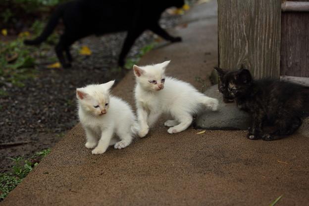 竹林園で生きていけるか子猫