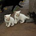 Photos: 竹林園で生きていけるか子猫
