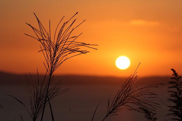 夕日とススキ・・浜