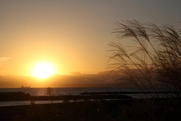 夕日とススキ・・丸島