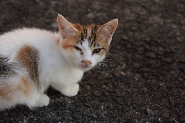 子猫・・丸島漁港