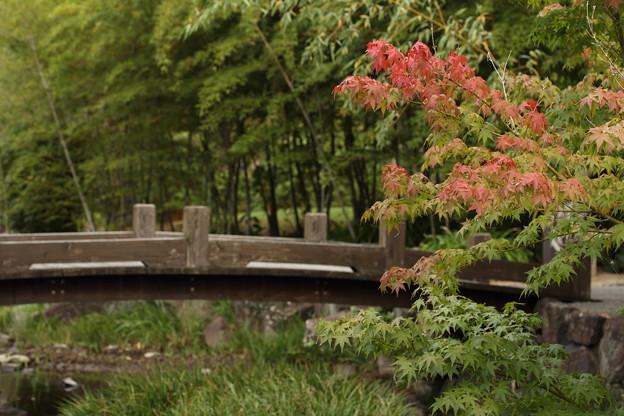 紅葉しているのではありません・・竹林園
