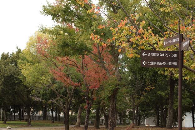 秋もよう・・エコパーク