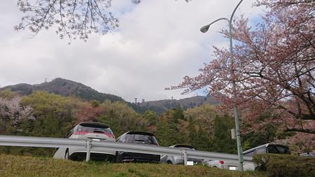 筑波山も桜が咲いていた