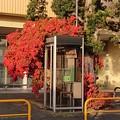 Photos: 電話BOX保存会