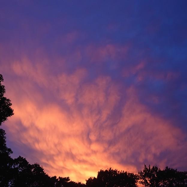 印象派な夕景