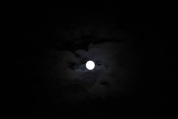 Photos: 雲間からの名月