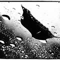 Photos: 雨-2