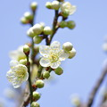 Photos: 近づく春
