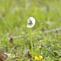 Photos: 春風に吹かれて