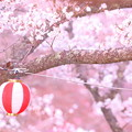 Photos: 春飾り