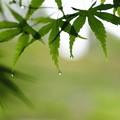 雨柔らかに