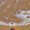 Photos: 波の調べ