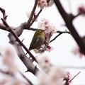 Photos: 春ですねぇ