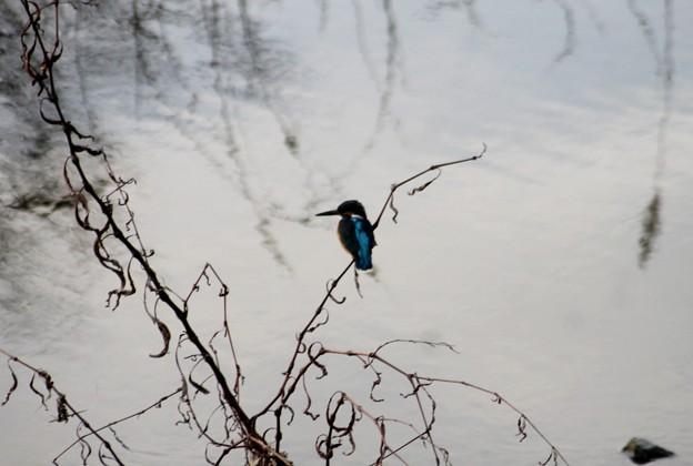 鳥撮り朝散歩