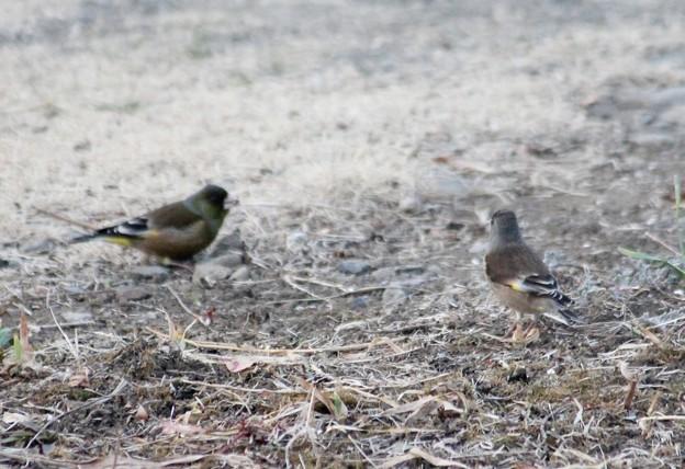 初見の鳥さん