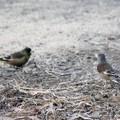 Photos: 初見の鳥さん