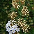 小さいお花の