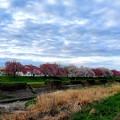八重桜の咲く散歩道で
