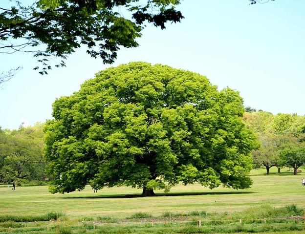 この木なんの木気になる木