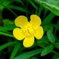 野に咲く小さなお花