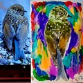 Photos: ルリビタキ幼鳥