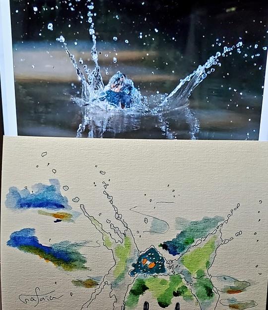 カワセミの描く水のアート