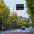 銀杏香る甲州街道
