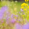 春の気配~♪ その1
