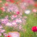 夢の中の花畑