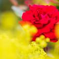 大石公園の花たち3