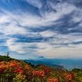 レンゲツツジと富士山 三窪高原にて その1