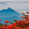 レンゲツツジと富士山 三窪高原にて その2