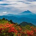 レンゲツツジと富士山 三窪高原にて その3
