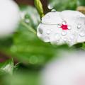 雨あがりの花壇