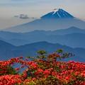 レンゲツツジと富士山