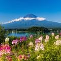 富士山と色とりどりの花